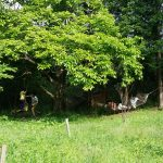 森で遊ぶ子ども達